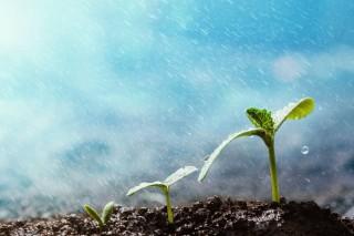 Shutterstock 1050081884