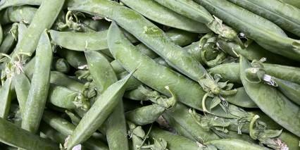 Fresh Peas 1