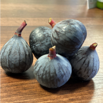 Baby Fig1