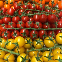 Mixed Cherry Toms