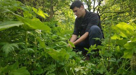 James In Spring Pick