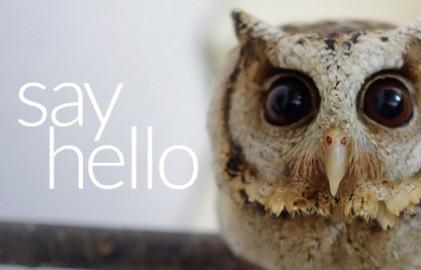 Hellog