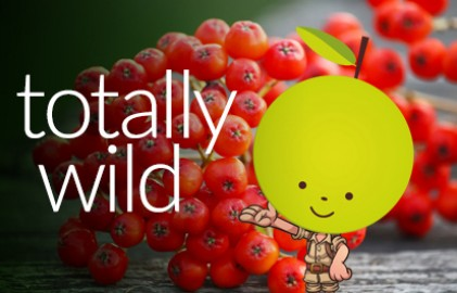Totallywildgrid