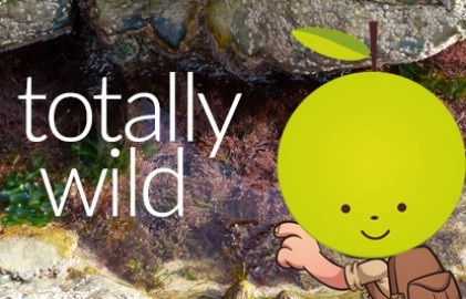 Totwild8Grid