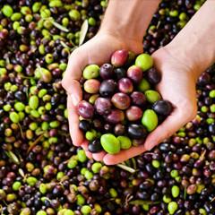 Gb2 Olives