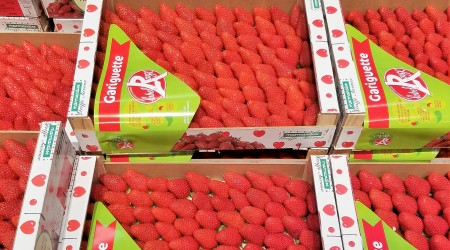 Strawberry Gariguette X2Kg 15 03 17