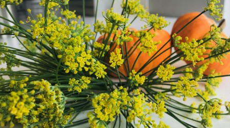 Fennel Flowers3