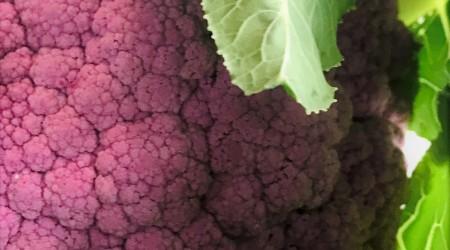Purple Cauli