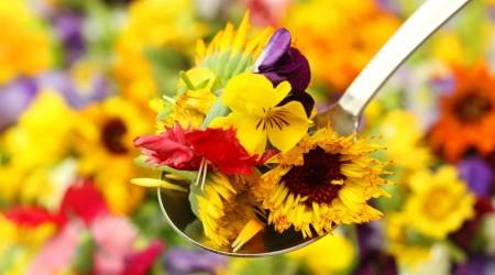 Shutterstock 516440922